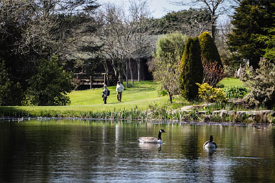 Ponds Woodland
